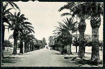 Allee-des-Palmiers-GOURAYA-C.ROCHARD.jpg