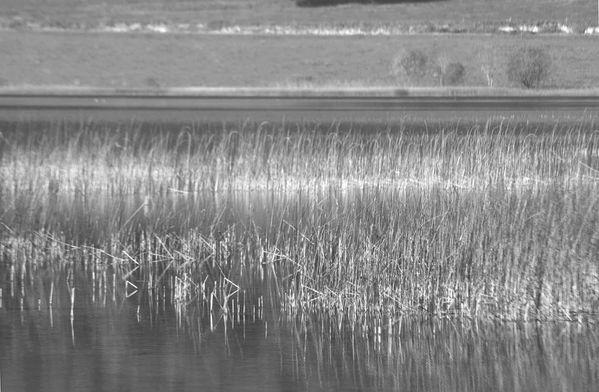 lac mi-octobre 019NB