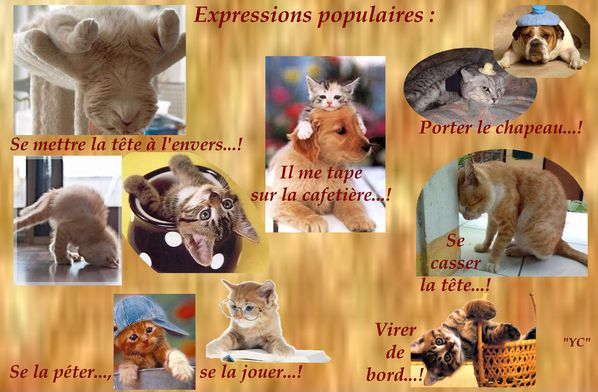 EXPRESSIONS POPULAIRES