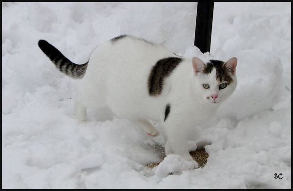 Chat neige-02