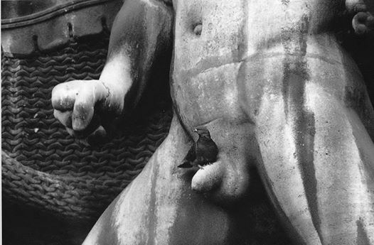 pigeon-sur-statue.jpg