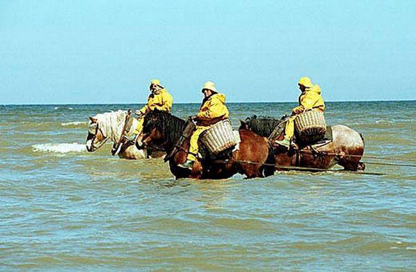 Shrimpers_on_horseback.jpg