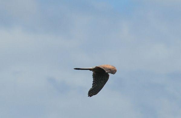 oiseaux-4622m.jpg