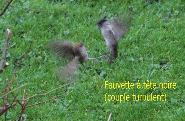 fauvette couple[1]