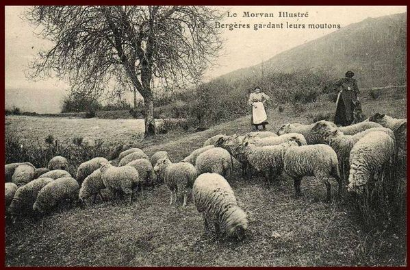 Moutons 02