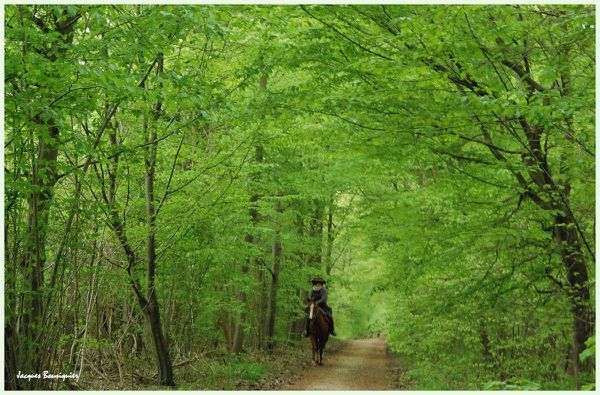 Chantilly foret 3