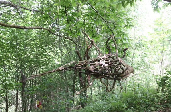 Divers-3-6582-Les-poissons-se-balancent-dans-les-branches-jpg