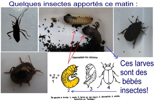 montage-insectes.jpg