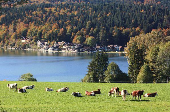 automne 2010 033