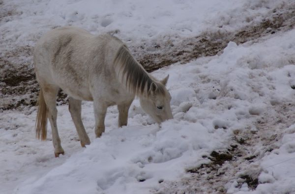 cheval areches le planay (13a)
