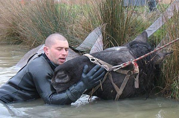 20091223 un-cheval-sauve.bl
