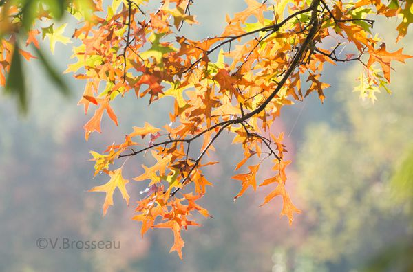 feuille-automne14-02