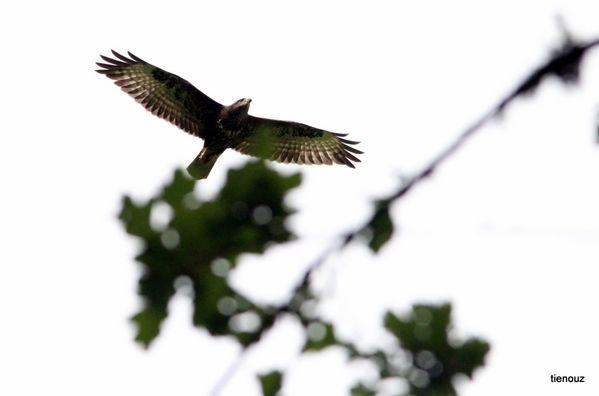 oiseaux 8997