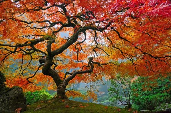 les_plus_beaux_arbres_du_monde_oregon_portland_jardin_japon.png