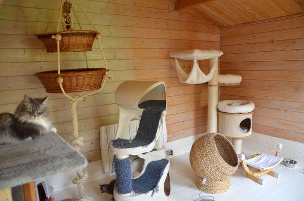 Le clos des bleuets blog norvegiens du clos des bleuets for Niche pour chat interieur