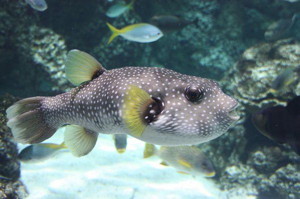 Aquarium-de-La-Rochelle-305-jpg