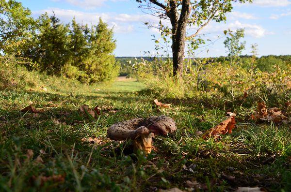 23-10-13 champignon