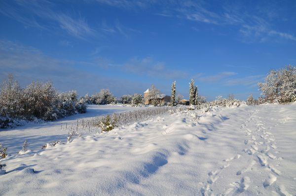 neige-Terre-a-vignes.jpg