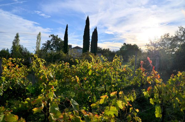 vendanges-2013-Jardin-de-l-ivresse-couleurs-d-automne.jpg
