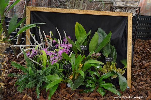 Orchidees---31-.JPG
