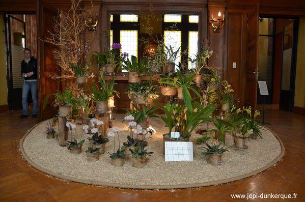 Orchidees---42-.JPG
