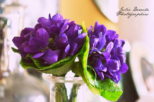 mariage-violettes.JPG