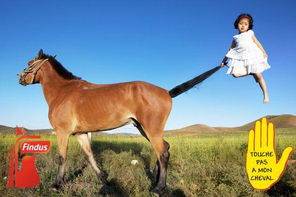 Findus_touche-pas-a-mon-cheval-Fillette.jpg