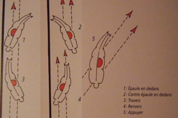 deplacement-lateraux-dressage.jpg