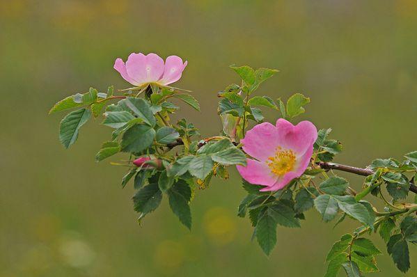 Fleurs-13-0872_.jpg