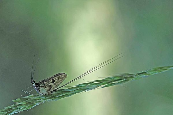 Insectes-papillons--4-8880_modifie-1.jpg
