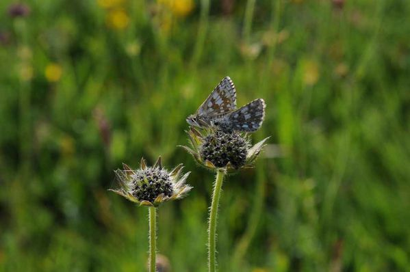 Papillons-insectes-2 3887