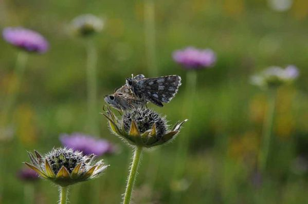 Papillons-insectes-2 3889
