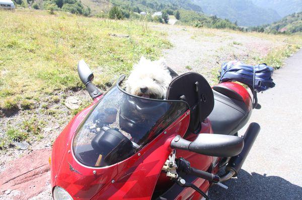 Insolites-2-1230-Moto-chien-jpg