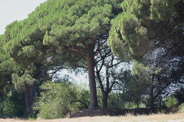 2006_Juillet_Palavas-052.jpg