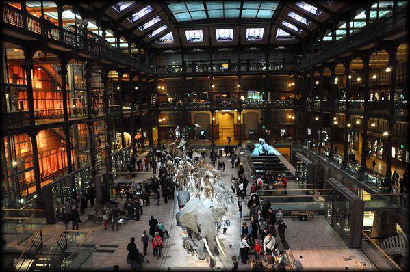 2012-Octobre---Grande-Galerie-de-l-Evolution-1a.jpg