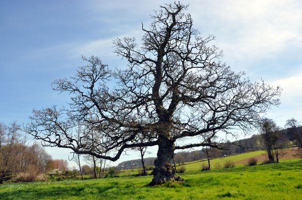 arbre-2555-613