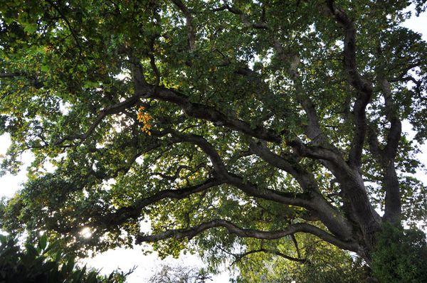 arbre-3140-spe
