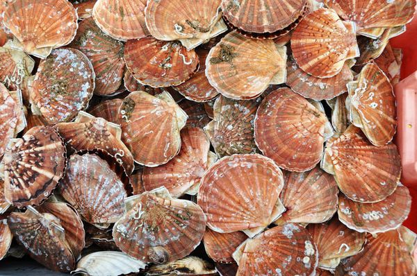 Coquille-05102011-010