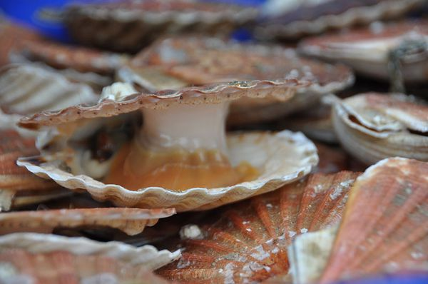 Coquille-05102011-100
