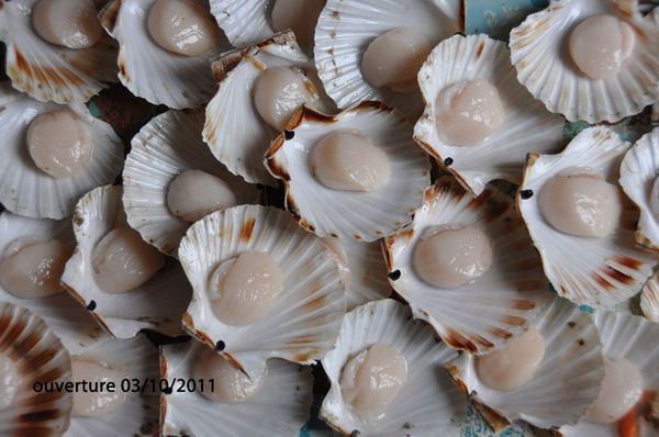 coquille-0310011-090