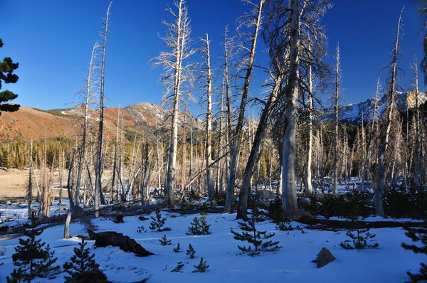 Mammoth-mountain-dead-trees-by-CO2-saturated-soil---the-ton.jpg