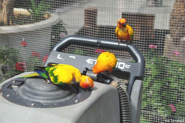 oiseaux 3761mini