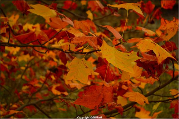 FEUILLE AUTOMNE (3)