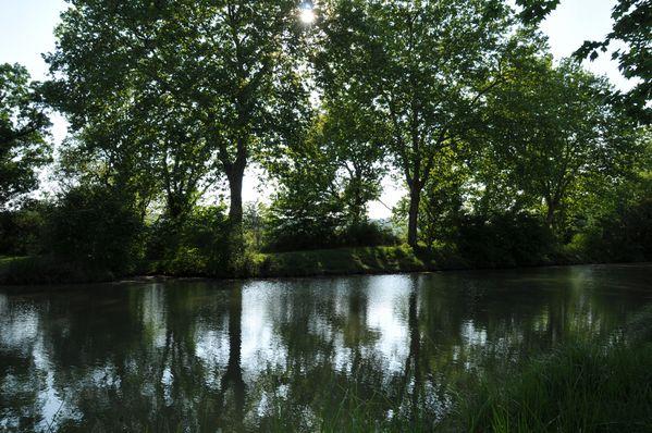 reflets sur les bords du canal du midi
