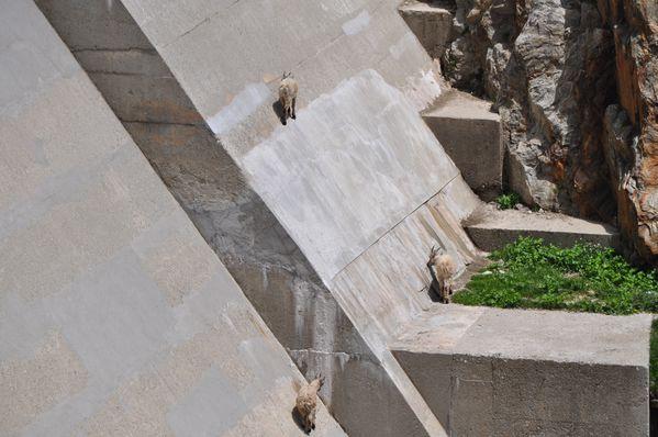 2012-mercantour-1er-jour 0192 (2)