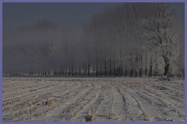 grand froid 2012 (38)