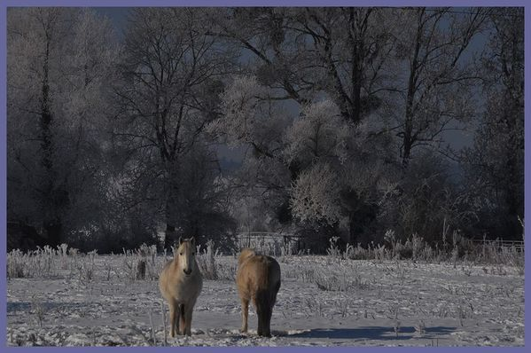grand froid 2012 (52)
