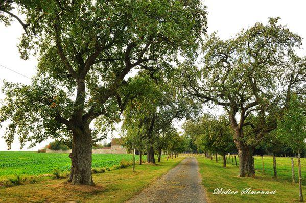 CHATEAU-THIERRY--Aisne-5828-Entree-Ferme-du-Lumeron.JPG