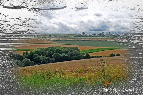 Paysage du Tardenois ( Photo Didier Simonnet )