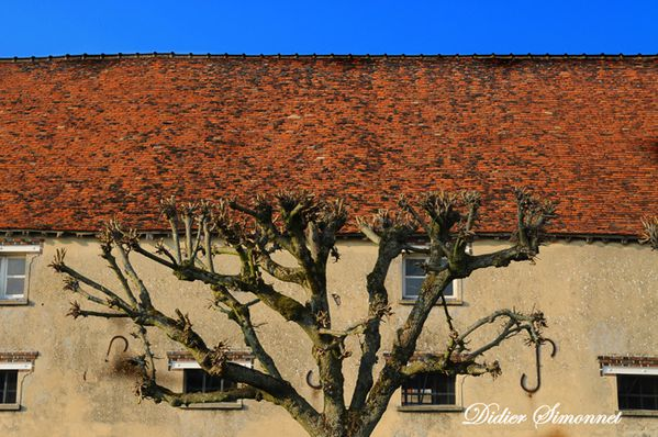CERNEUX--Seine---Marne-.-Didier-Simonnet------.JPG